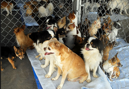 Some of the dogs pulled from the mobile home - pictures from The Arizona Republic