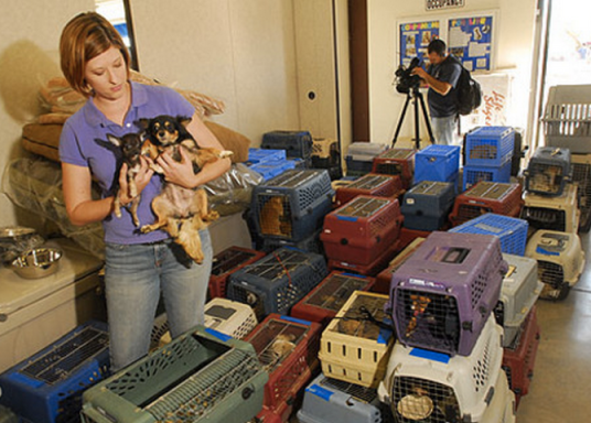 Lots of tiny dogs in lots of tiny crates - photo from The Arizona Republic