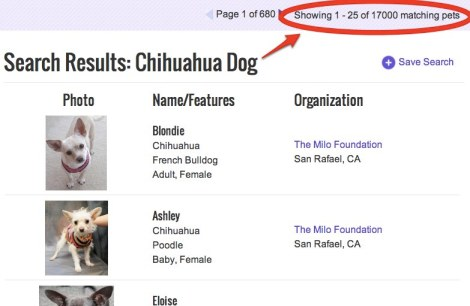 As of this writing, there are 17,000 homeless chihuahuas on Petfinder alone. STOP MAKING CHIHUAHUAS!